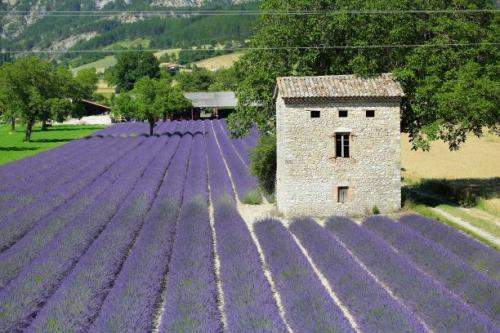 オーガニックと有機栽培と自然栽培の違いとは?